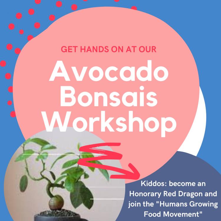 Avocado Bonsai Workshop For Kids