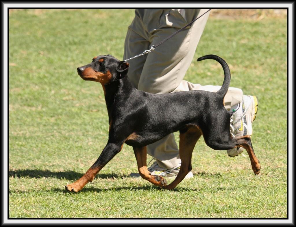 Zeus gait