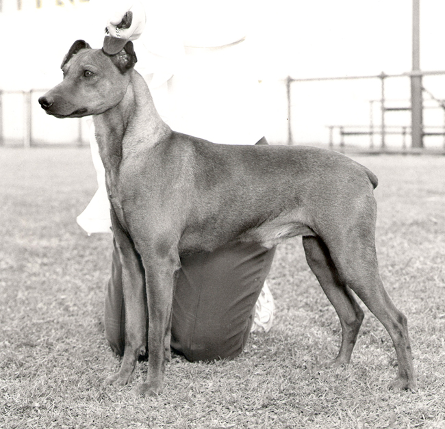 GP_gus_winning_BOB_Adelaide_Royal_Show-650.jpg