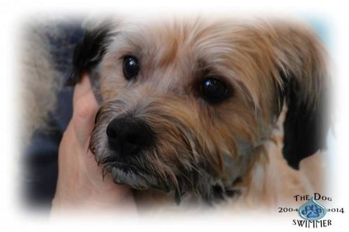 Joyful Rescues Non Profit Animal Rescue Group