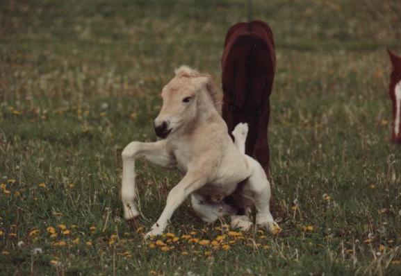Thor_Foals1.jpg