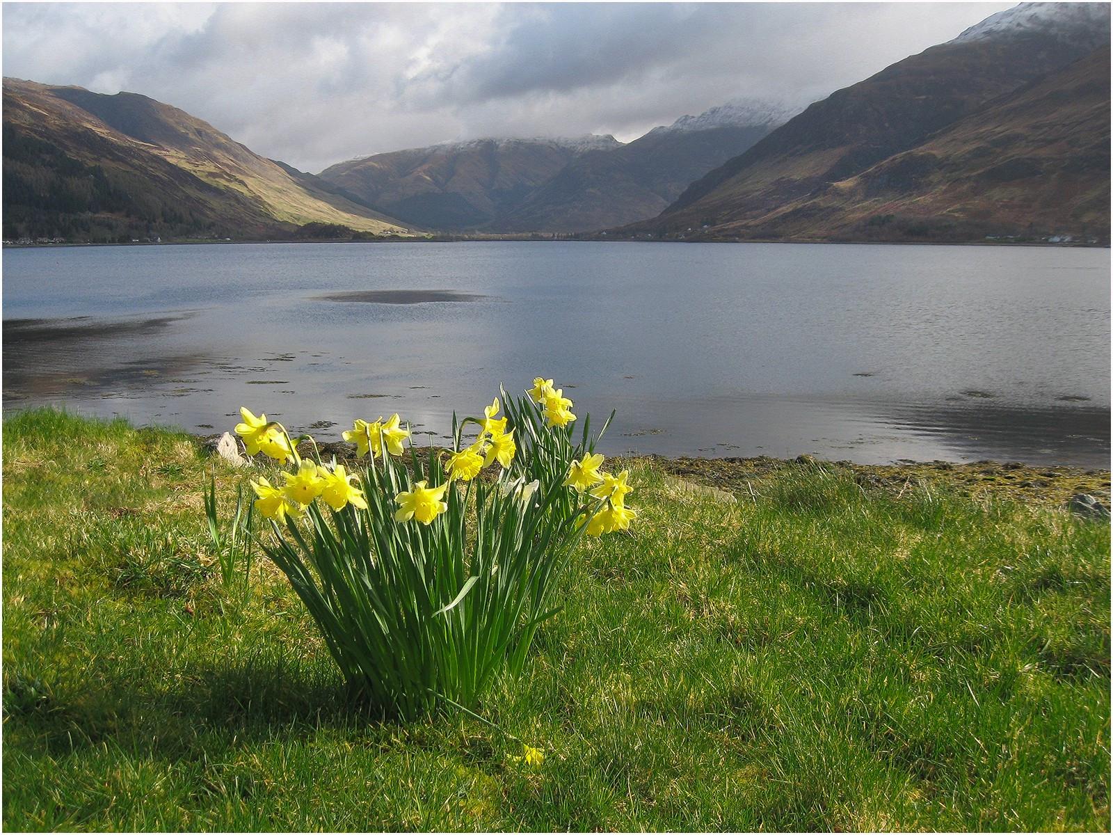 Spring Time Loch Duich