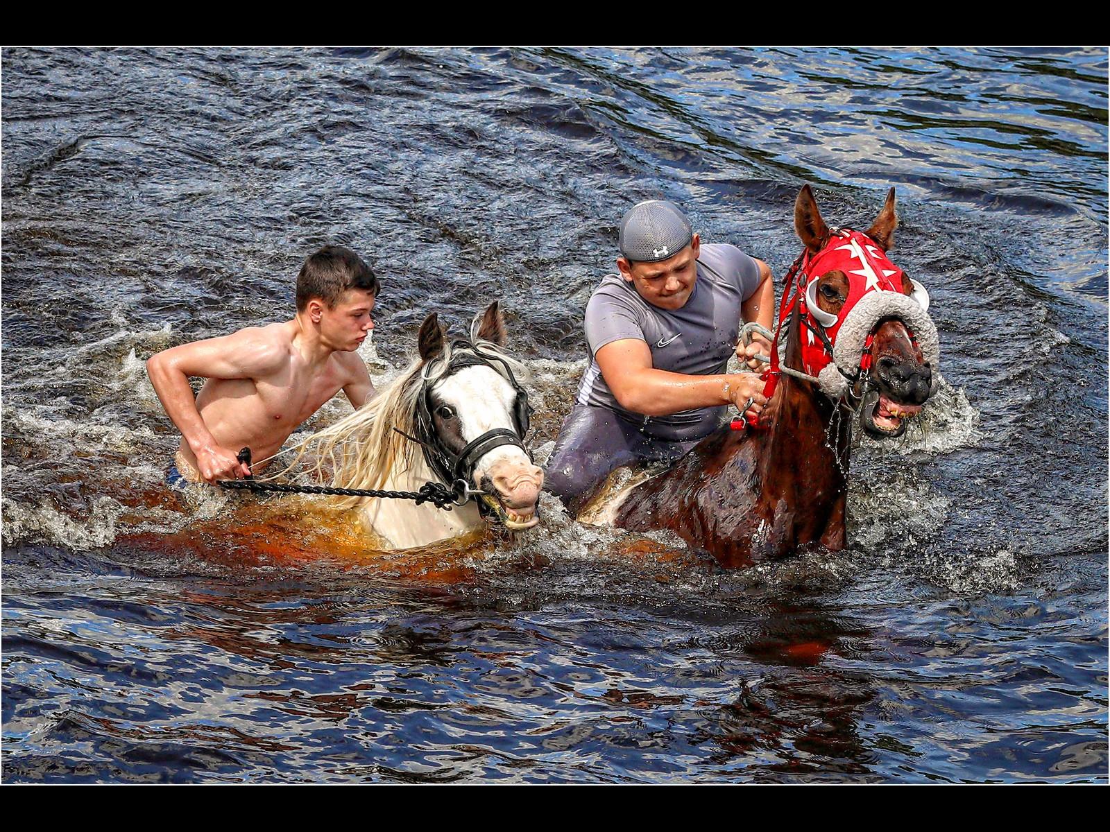 Appleby Fair Horse Power