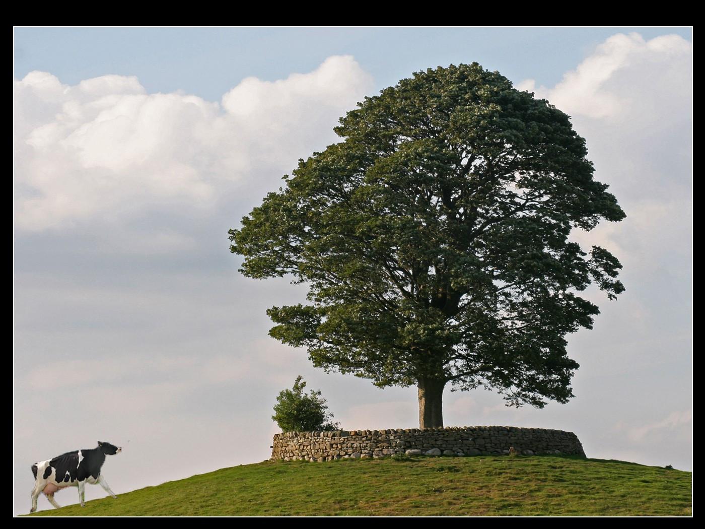 16. The Tree