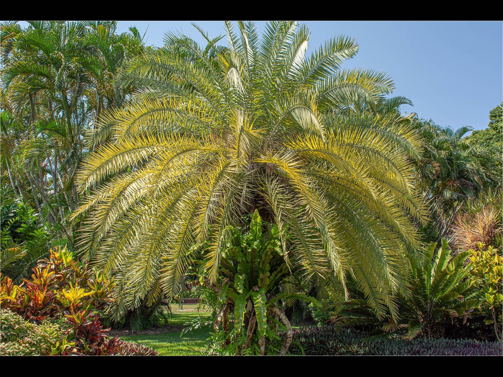 Palm Lawn Queensland Australia
