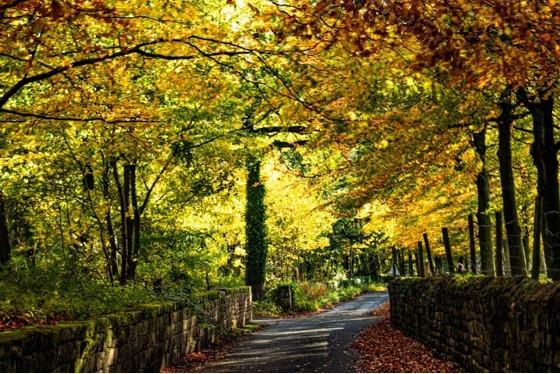 12. Sunshine Through Autumn Leaves