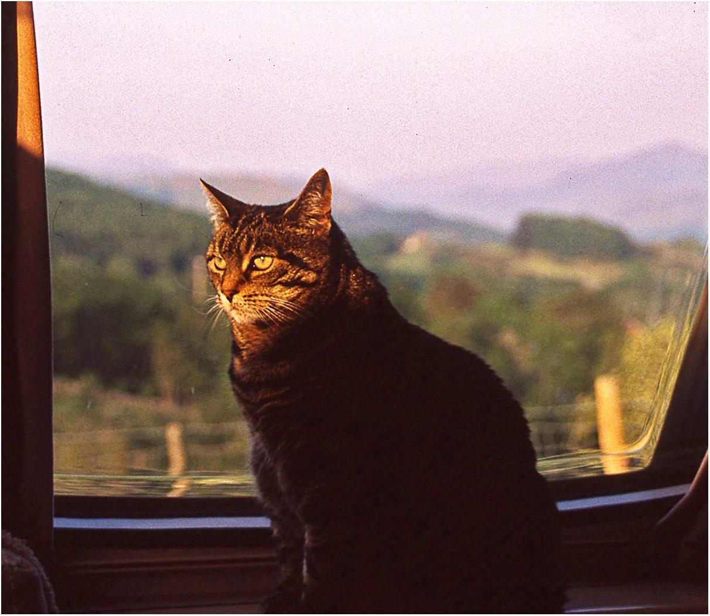 7. THE CAT