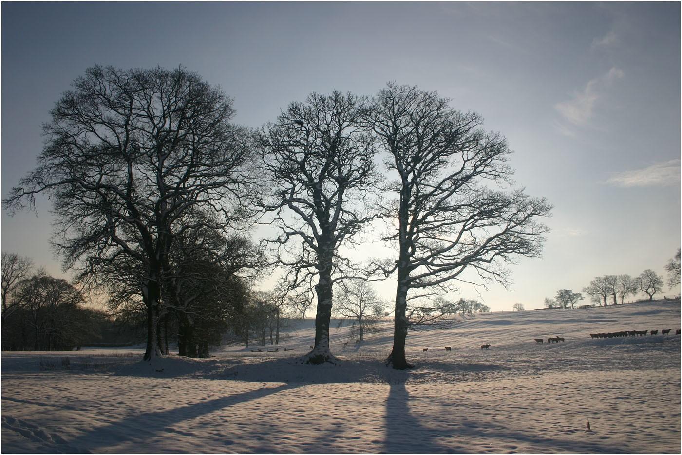 5. Winter Sun