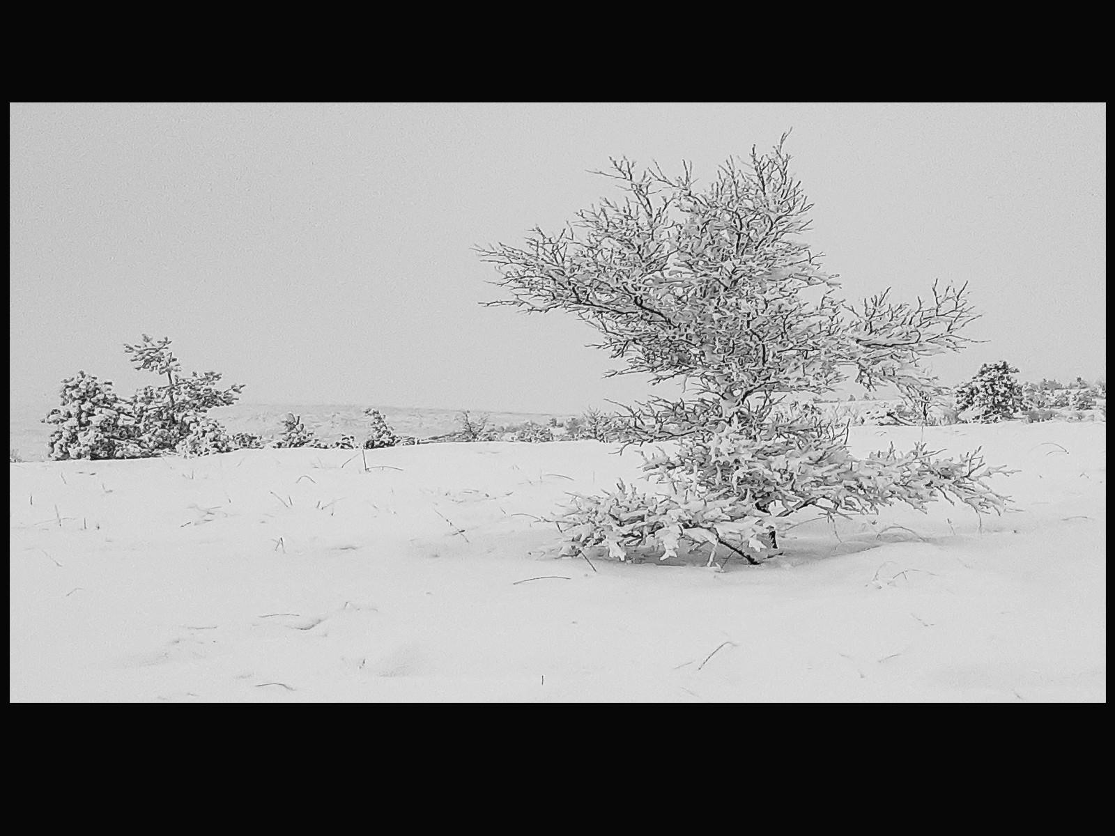 16. White Hill