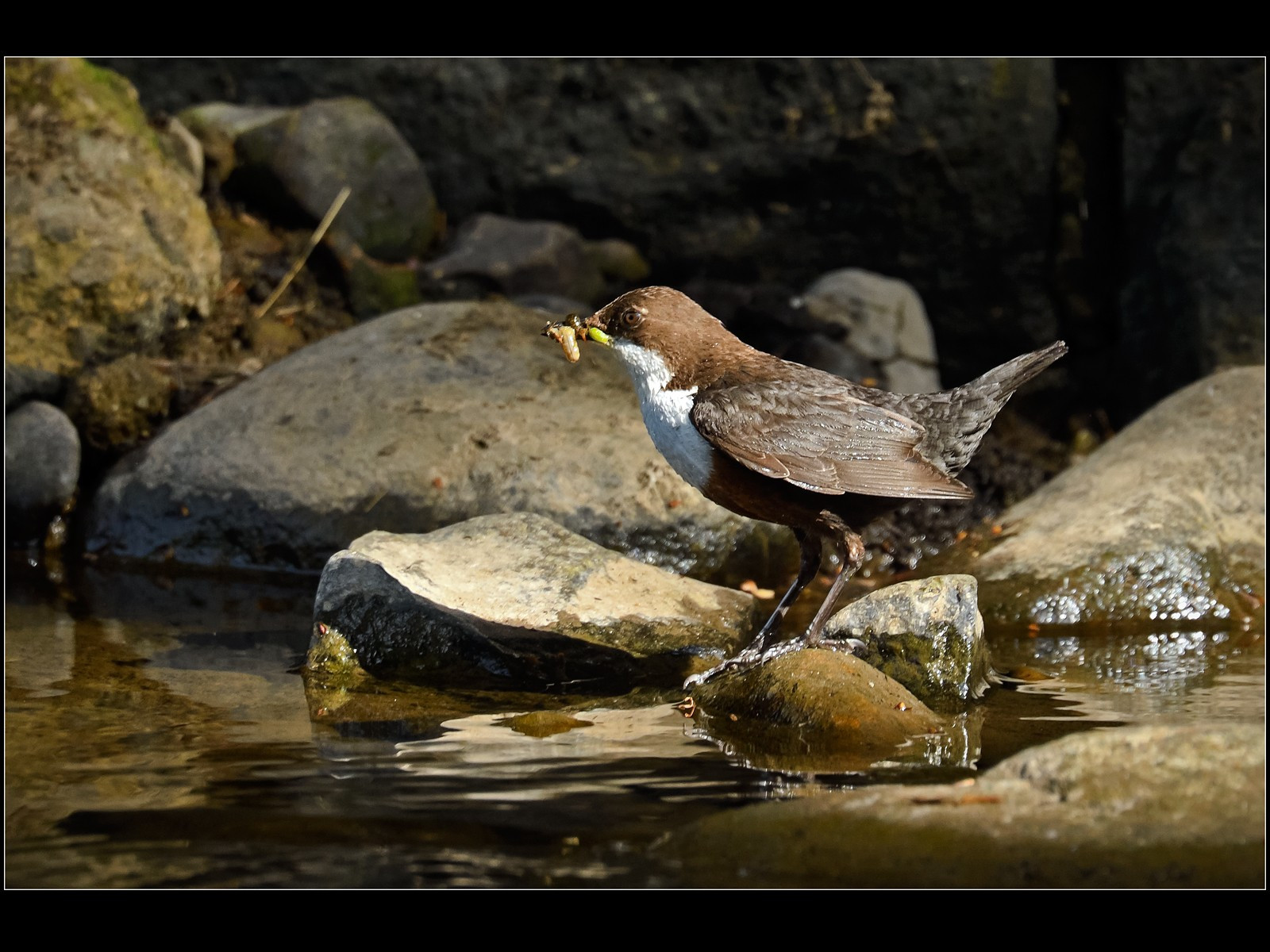 Dipper with              Grubs        Howard Harrison   15
