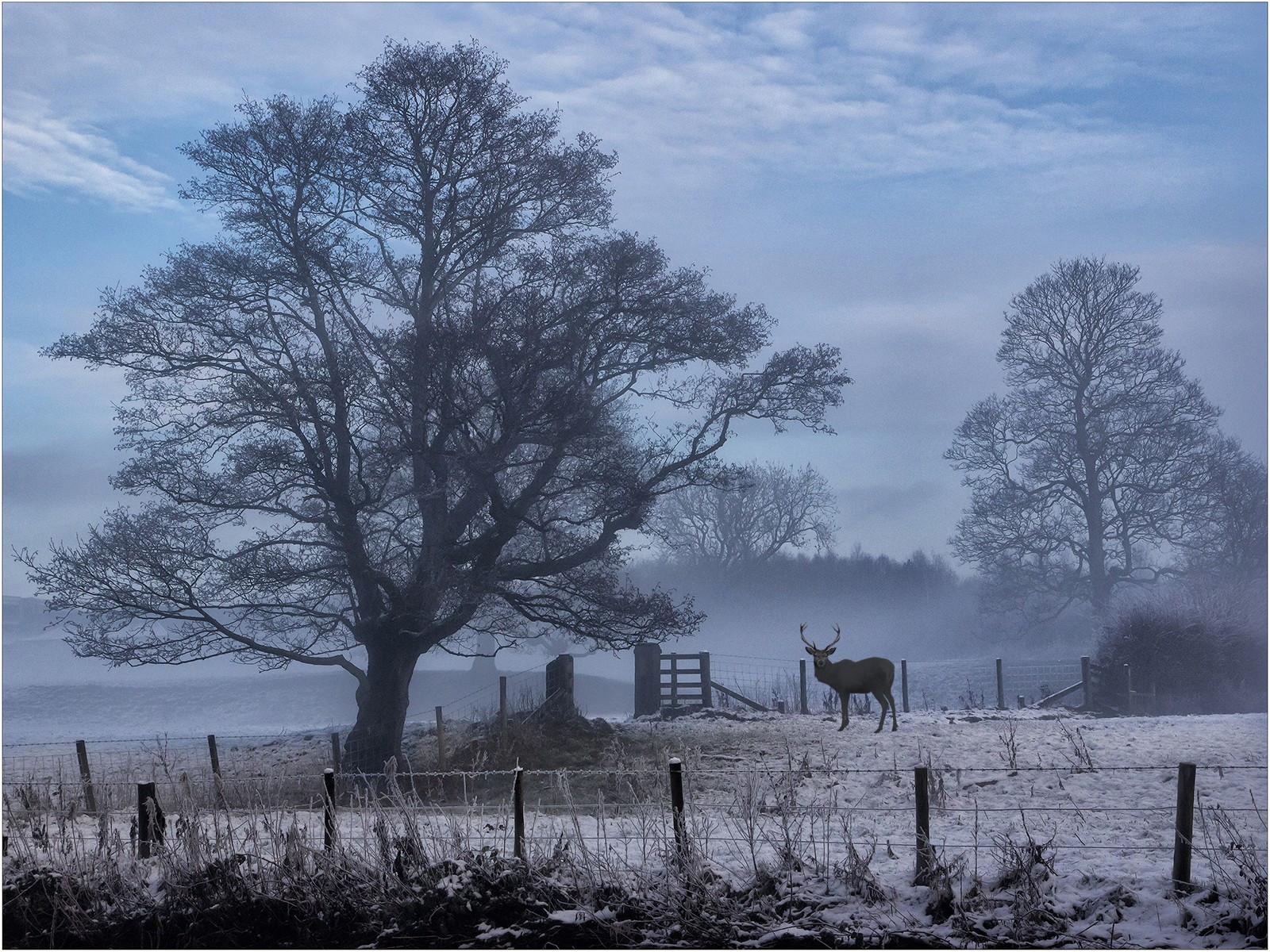 15. Misty Winter's Day