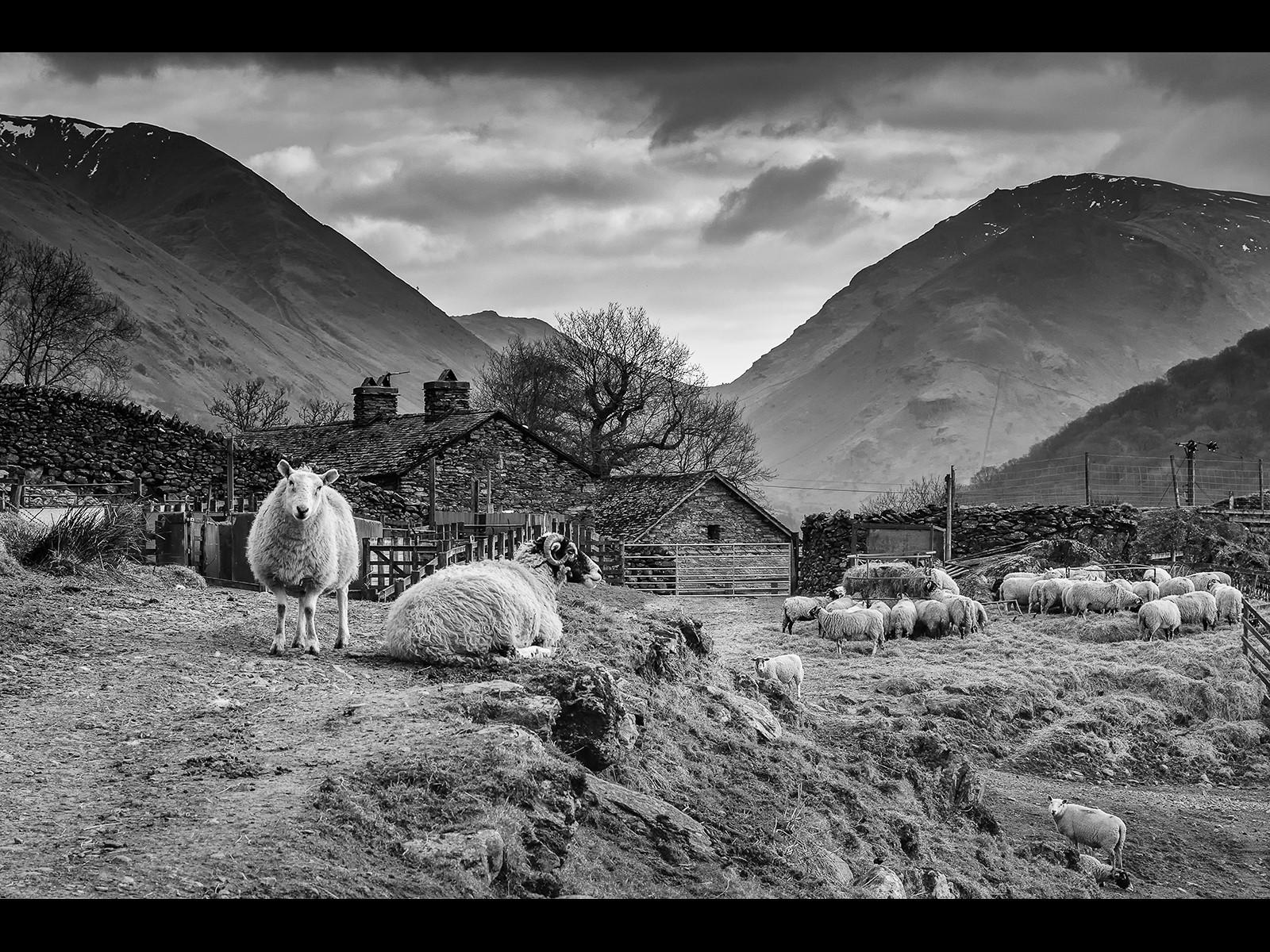 Lakeland Sheep Farm