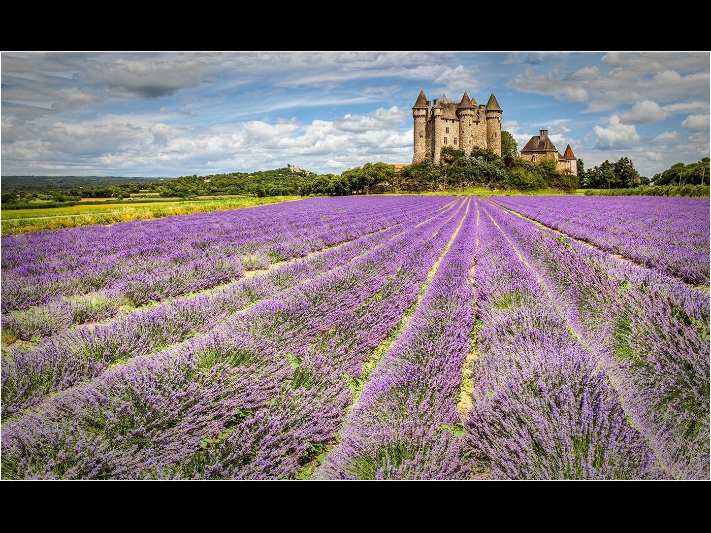 Lavender Field,Provence