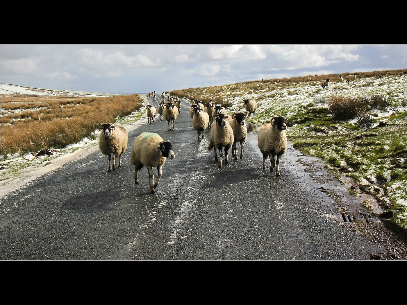 Flock on the Move