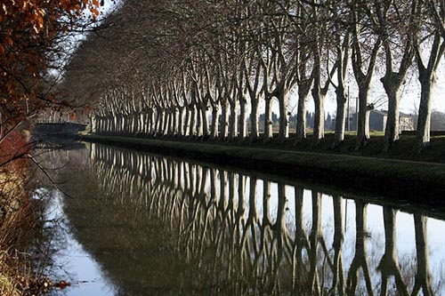 Avenue Reflections