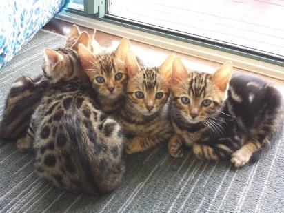 Pandora's kittens