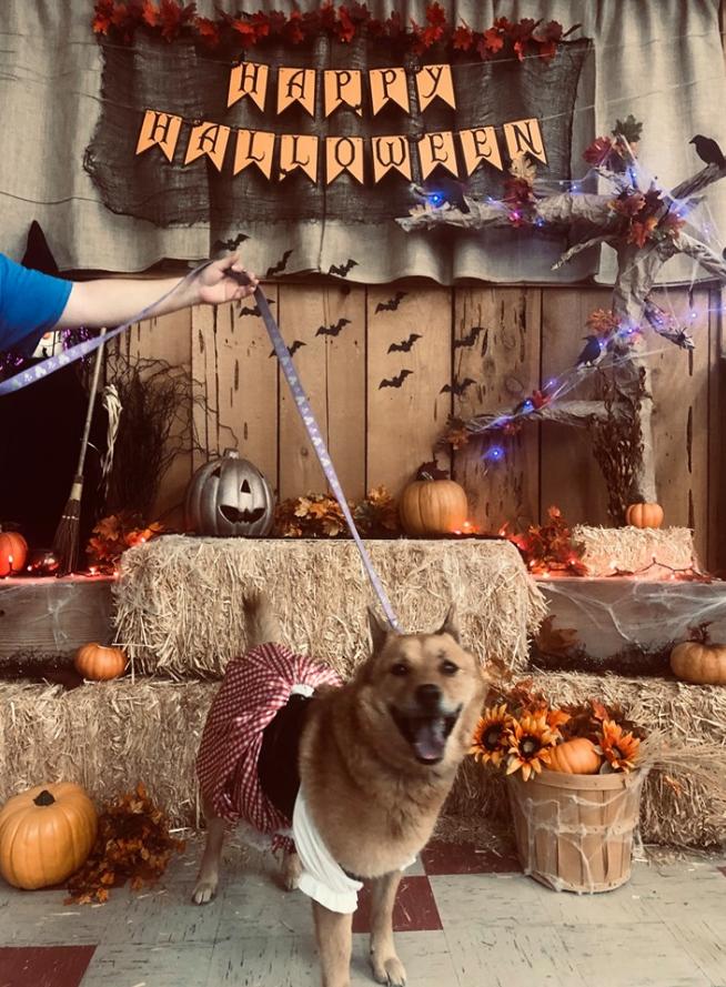 Halloween Photobooth 5