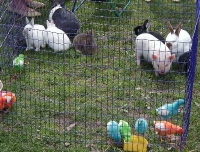Rent Petting Zoo
