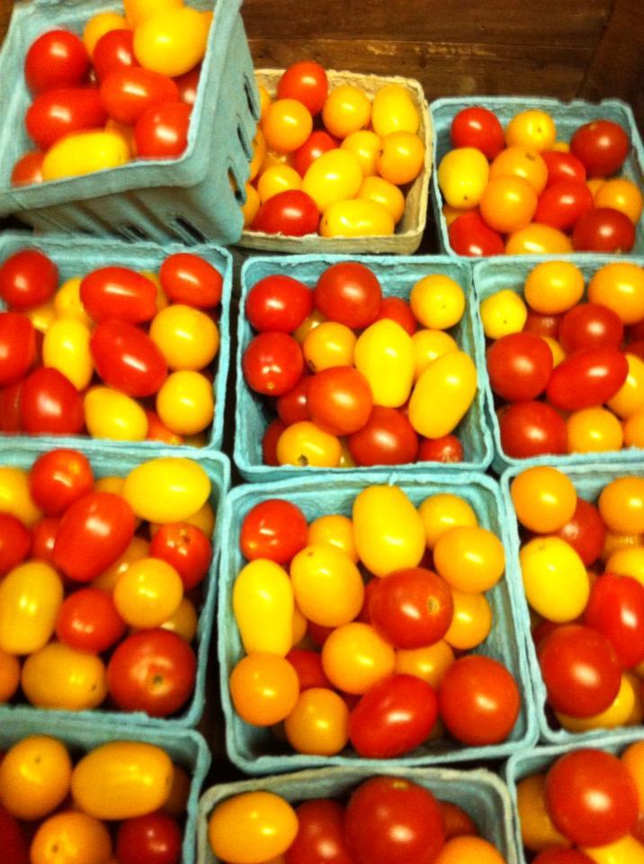 harvesttomatoes.jpg