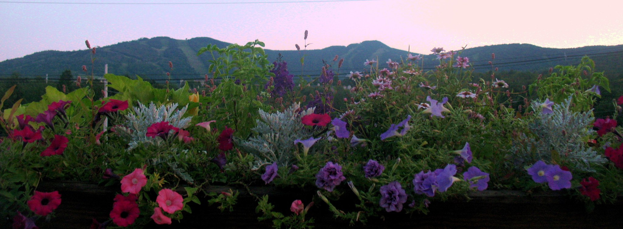 summerview2.jpg